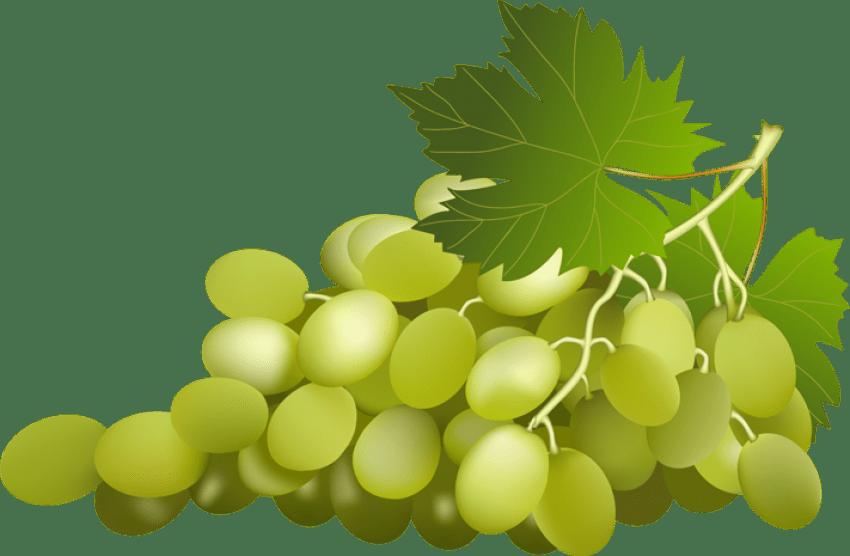 Clipart png grape. Green grapes clip art
