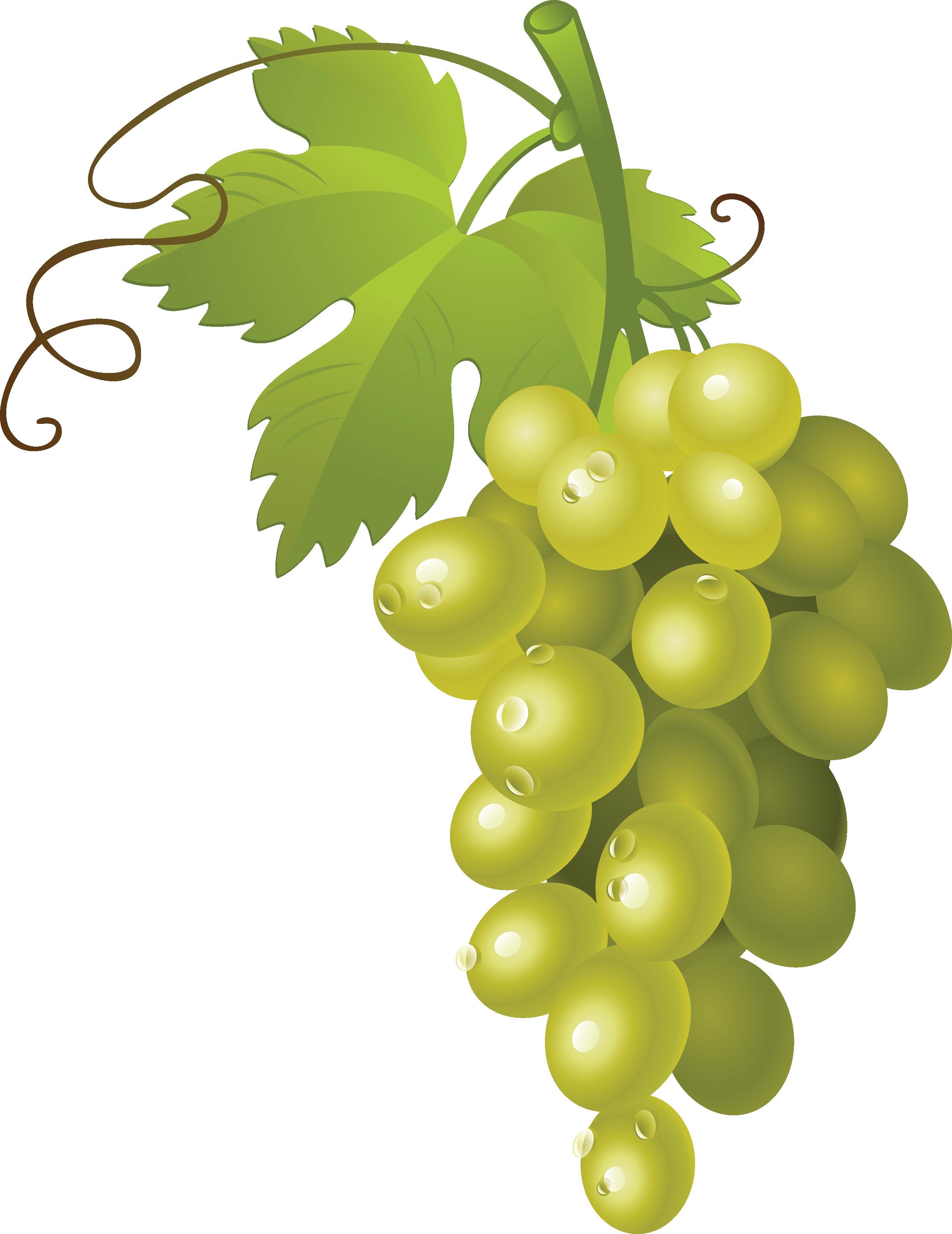 Grapes png image purepng. Clipart apples grape