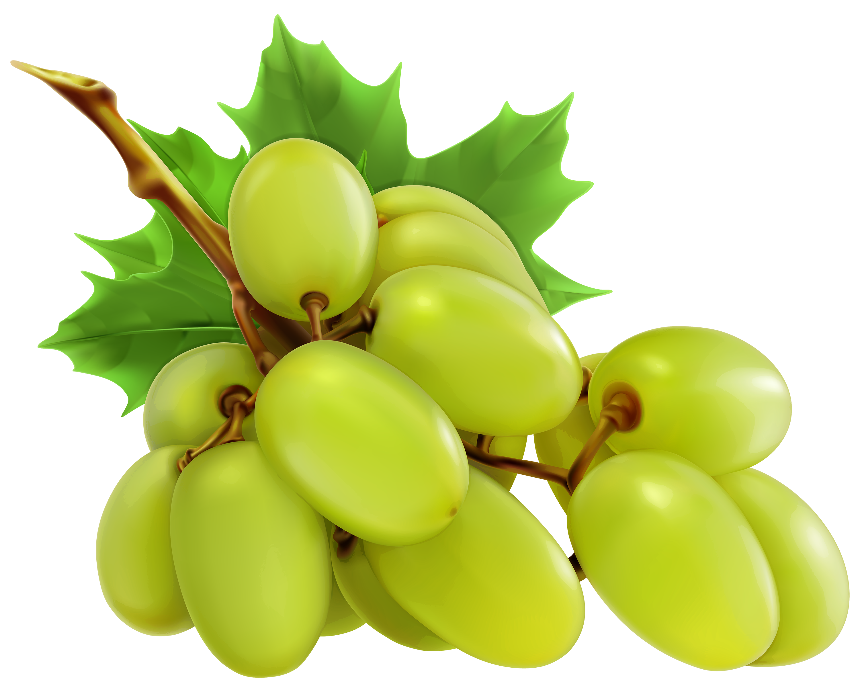 Single pencil and in. Grape clipart fruit vegetable