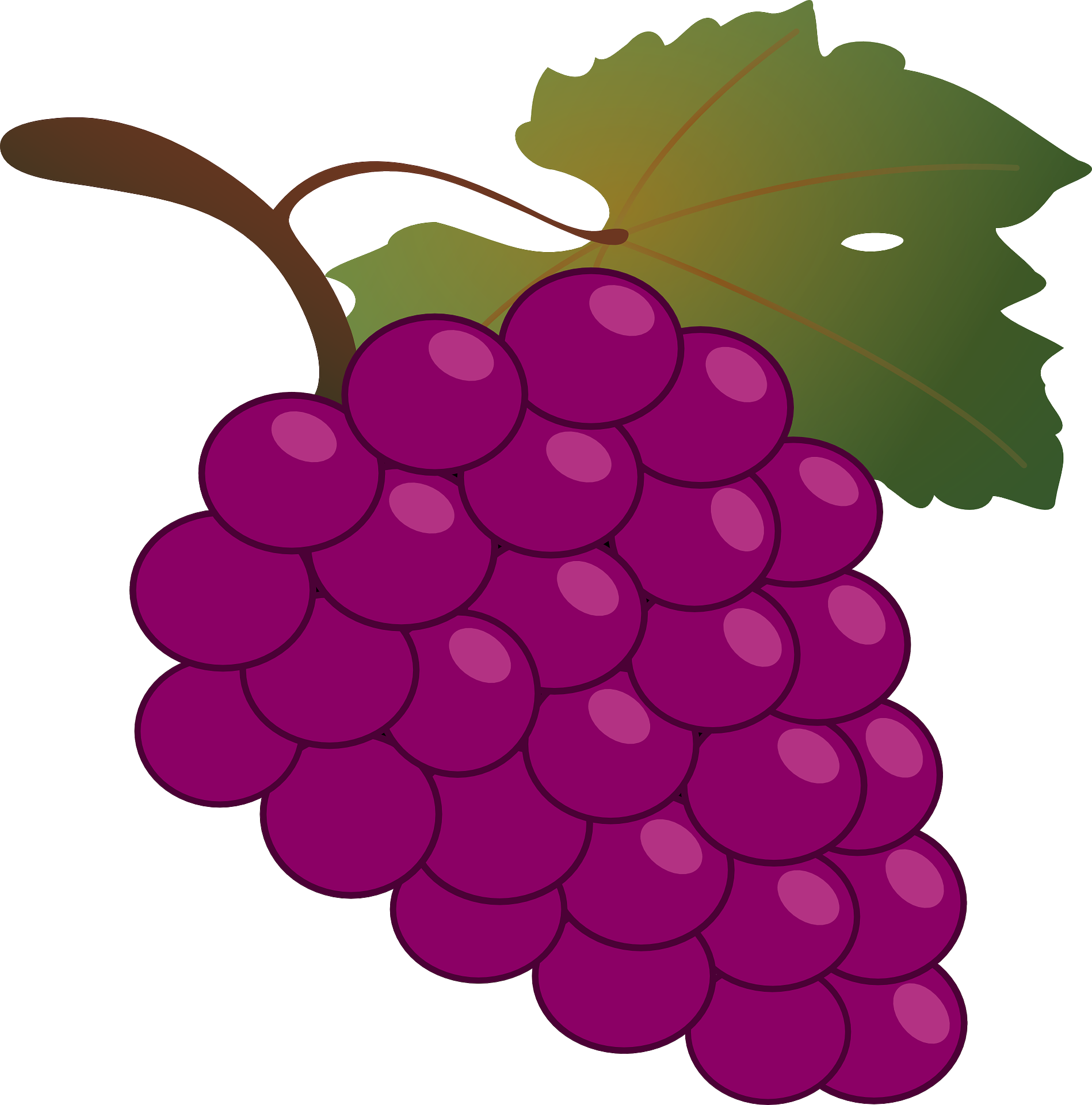Common vine wine grappa. Clipart png grape