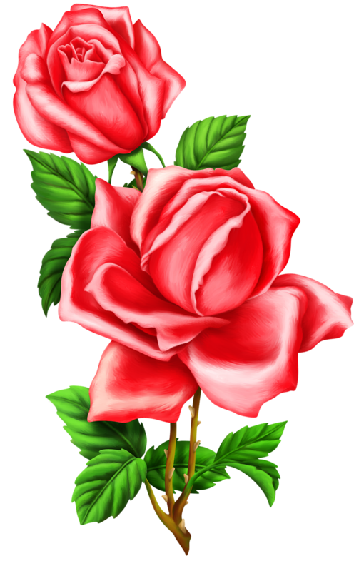 Pin by on pinterest. Clipart roses doodle
