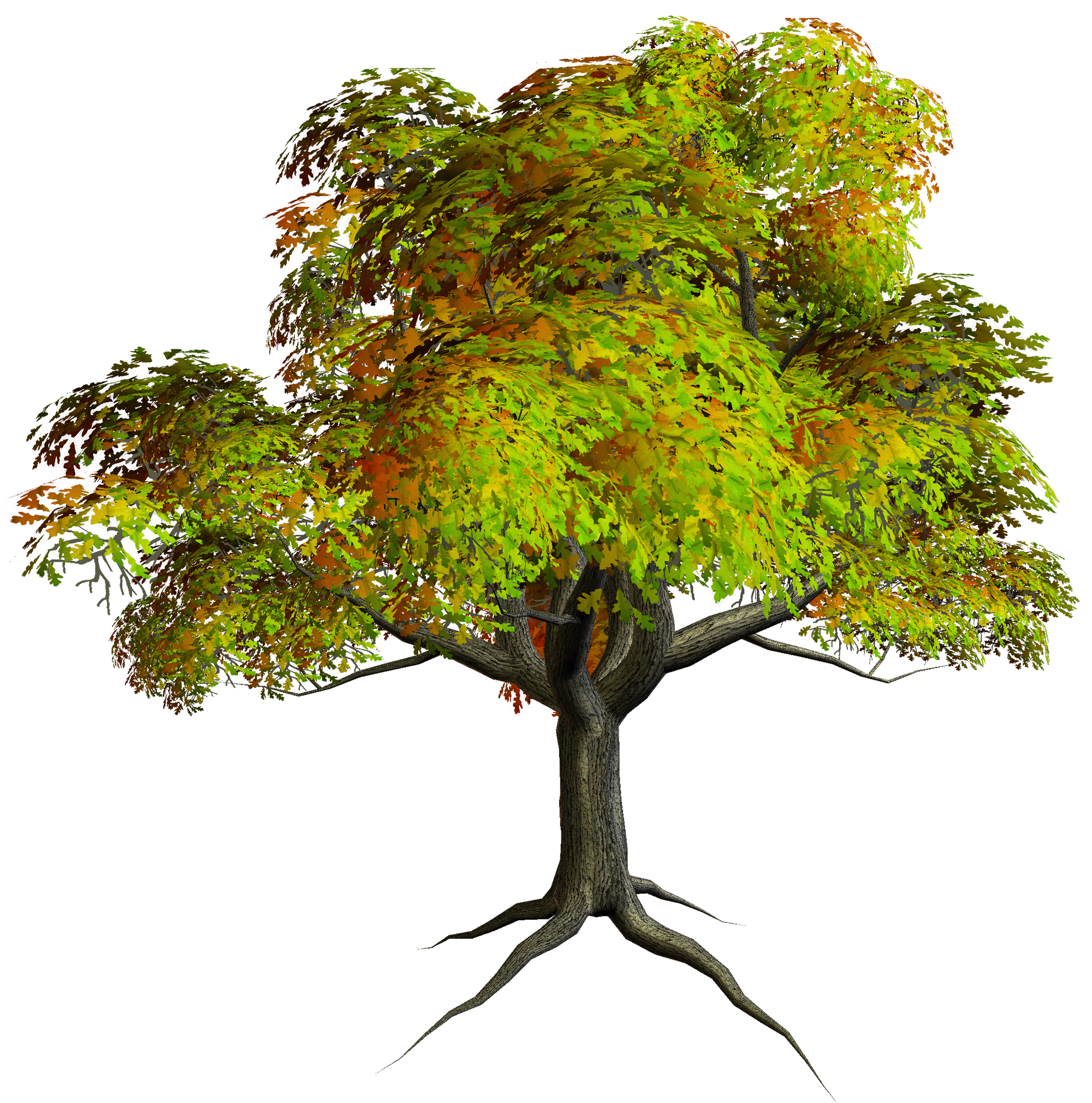 Clipart tree memories. Images free download clip