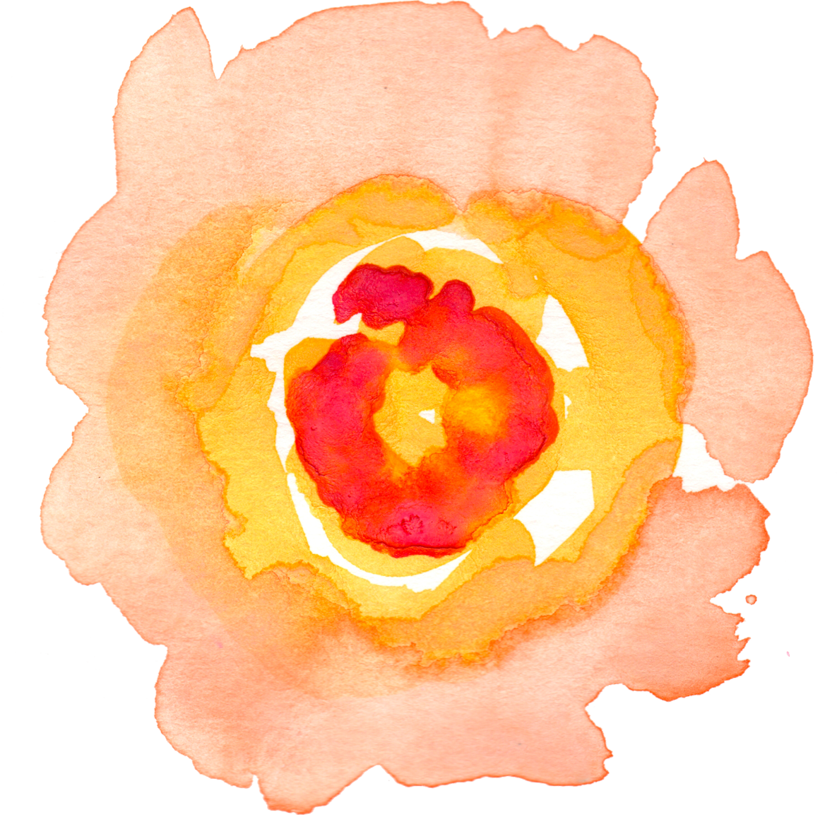 Watercolour flowers painting clip. Mango clipart watercolor