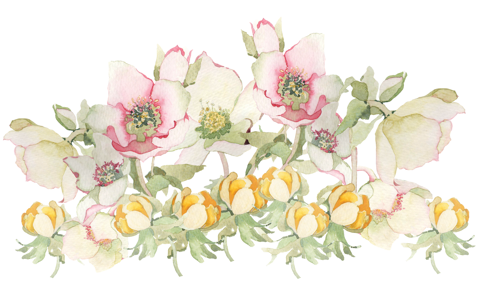 Spring flower png. Flowers transparent pictures free