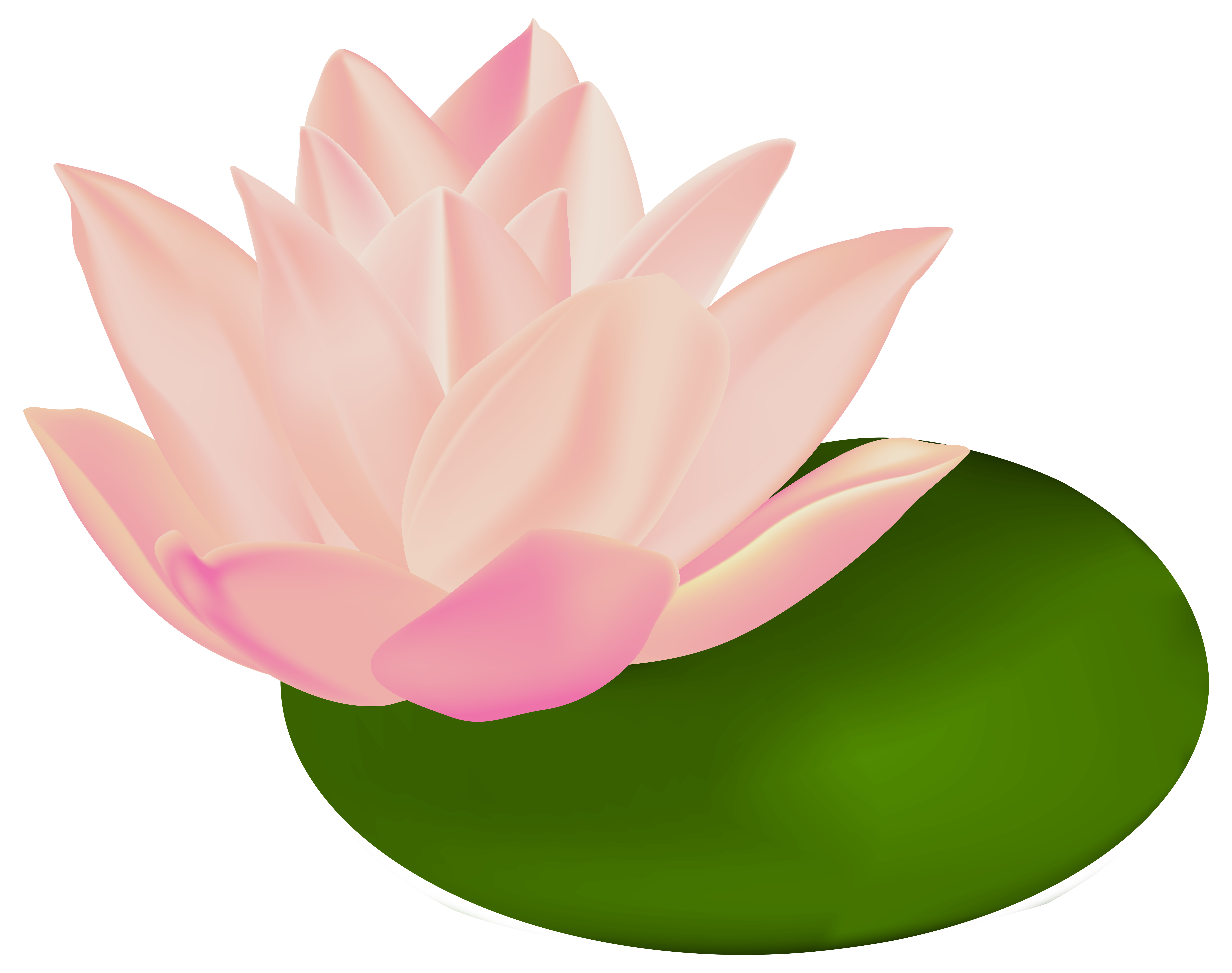 Water lily transparent clip. Lotus clipart waterlily