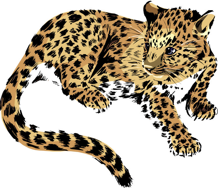 Female clipart jaguar.  collection of baby