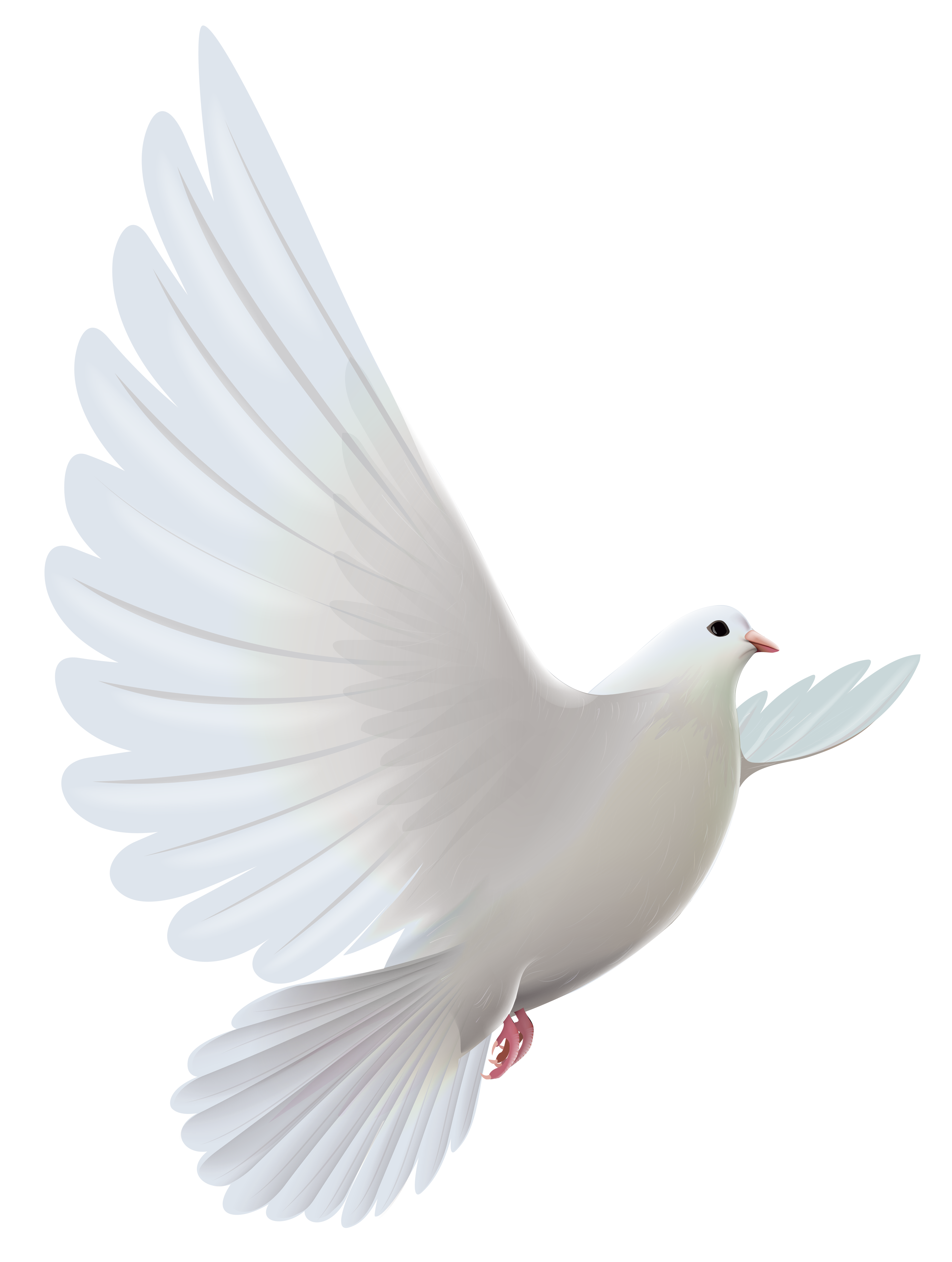 White dove transparent png. Wheat clipart ring