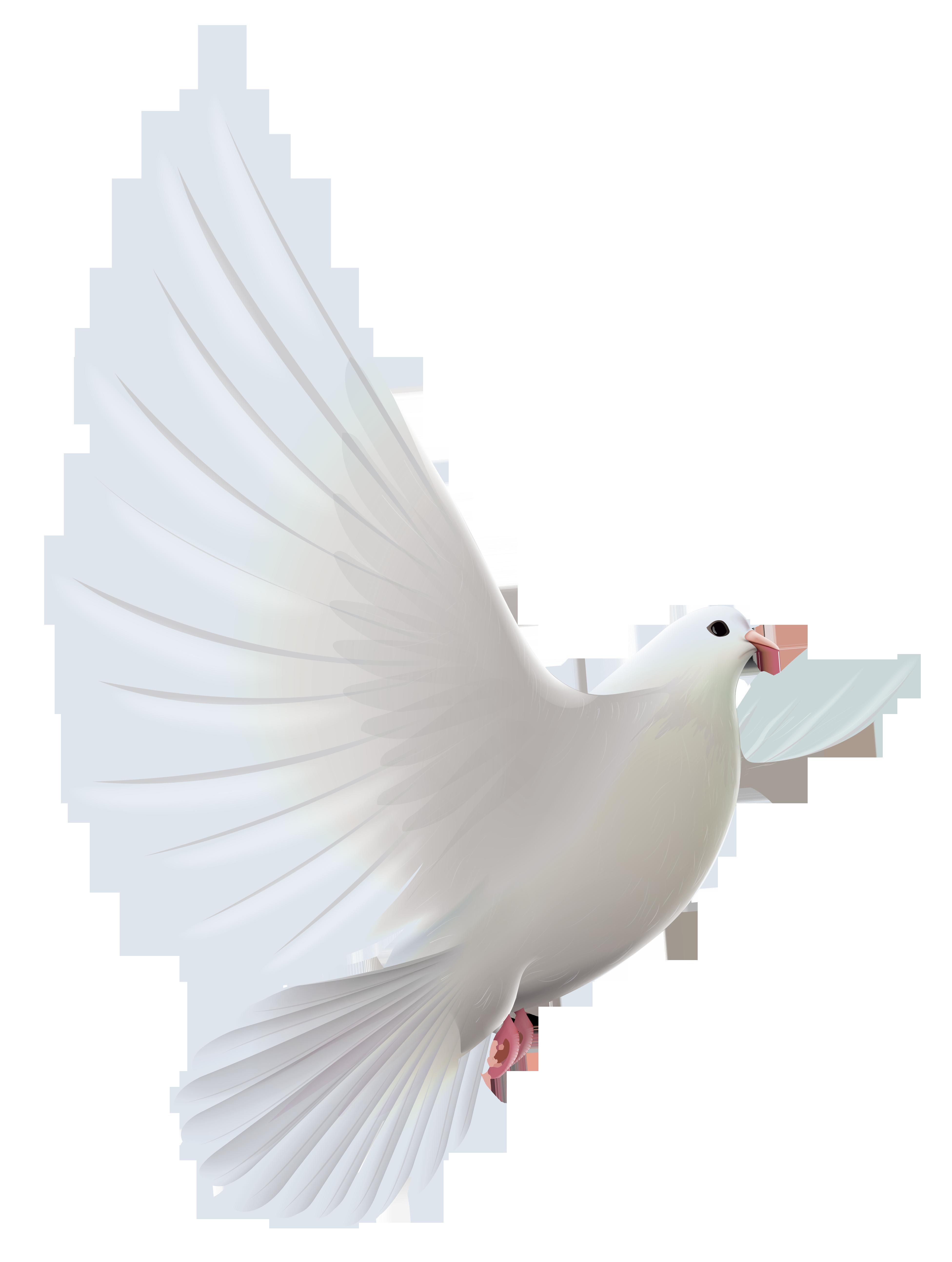 White dove transparent png. Peace clipart peacemaker