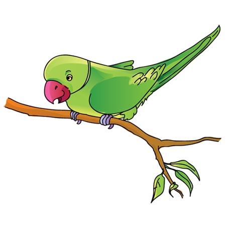 Parrot clipart green indian. Baby animals clip art