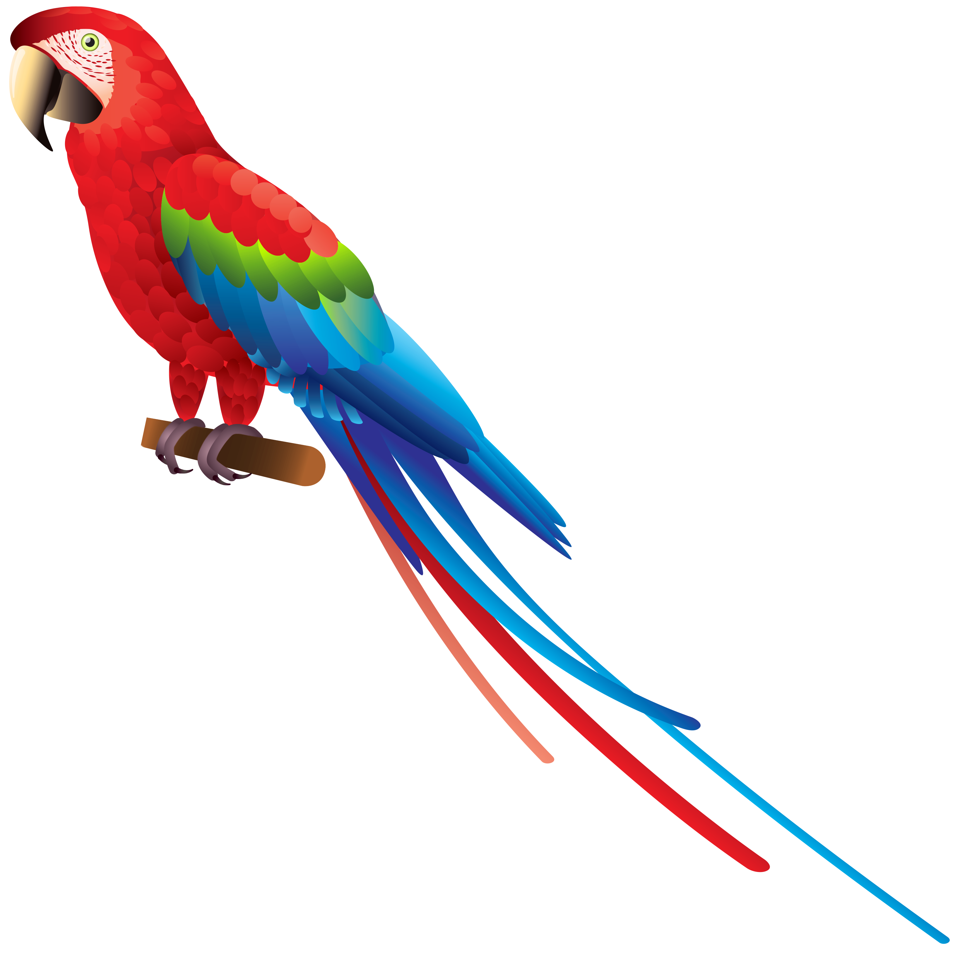 Parrot clipart tail.  collection of bird