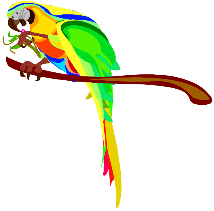 Pencil and in color. Parrot clipart blue yellow macaw