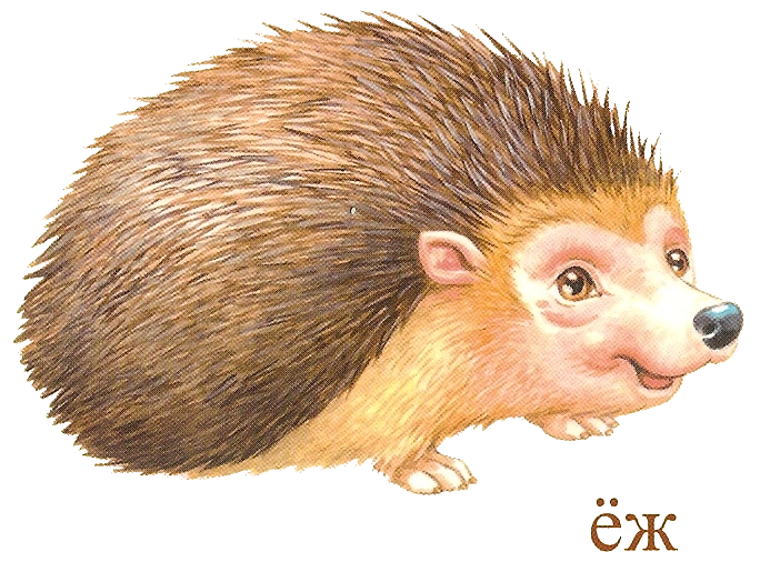 Pin by valentina on. Hedgehog clipart watercolor