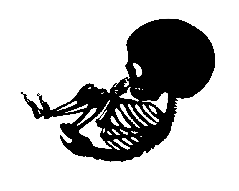 collection of baby. Longhorn clipart skeleton