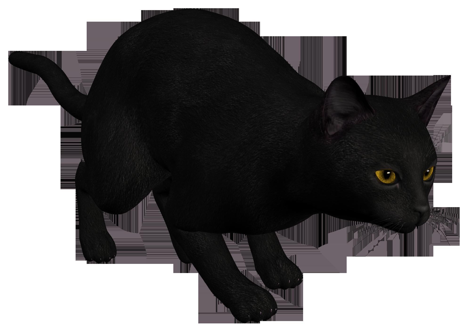 Black png best web. Money clipart cat