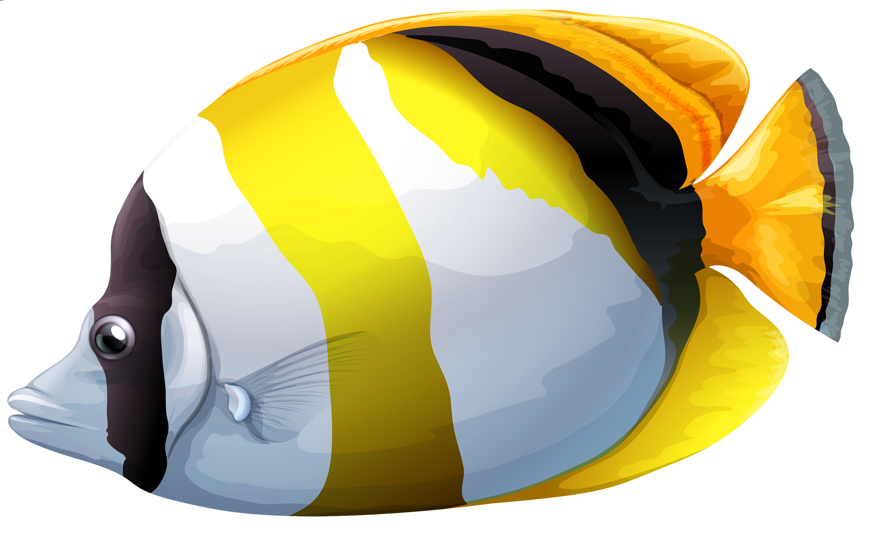Fishing clipart transparent background. Chaetodon butterfly fish png