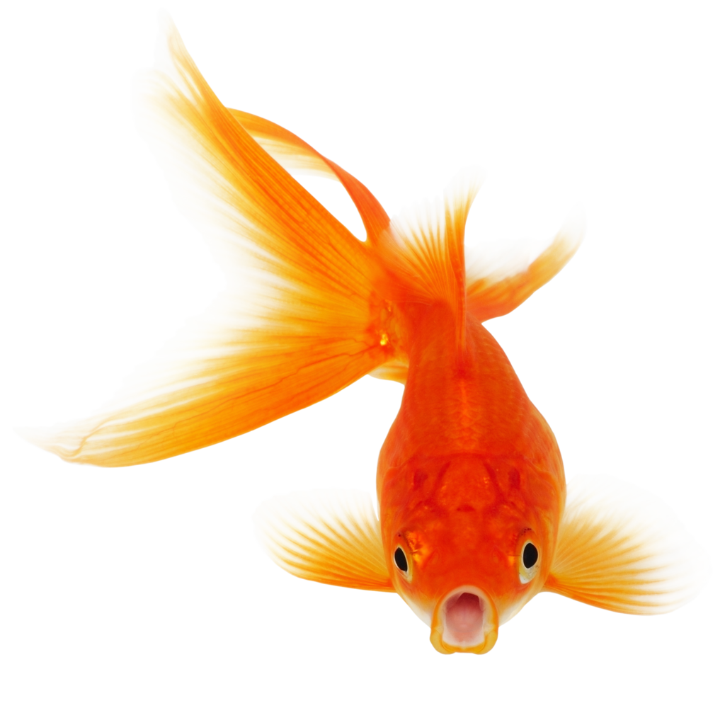 Download real hq png. Clipart balloon fish