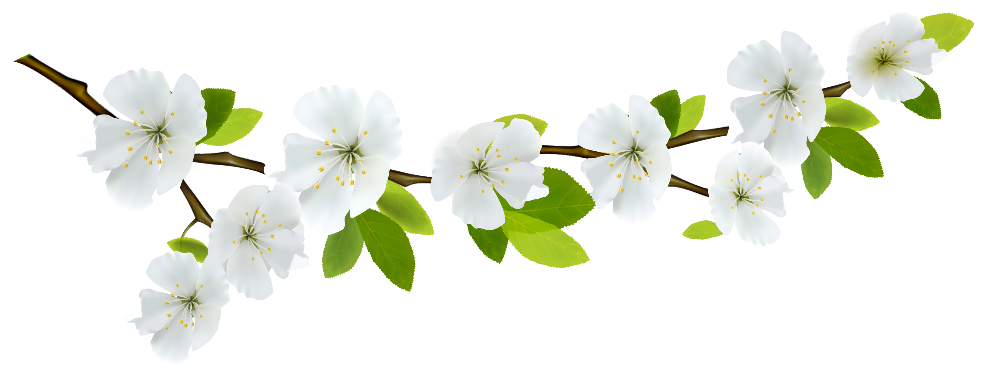 Branch white png gallery. Fruits clipart spring