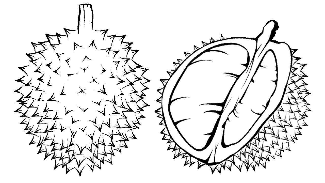 Coloring book durian black. Zipper clipart draw