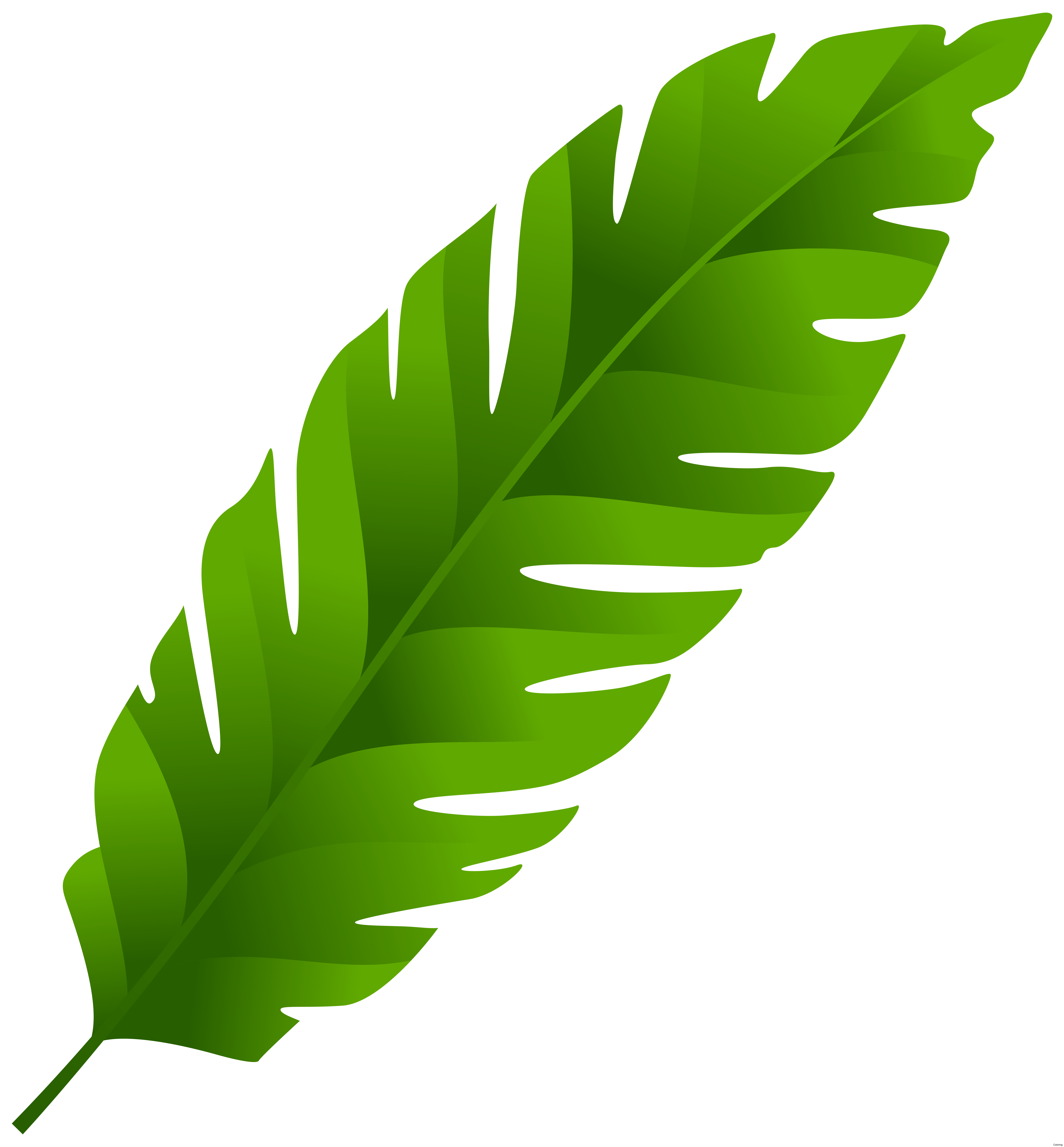Banana leaf palm manuscript. Clipart leaves mango tree