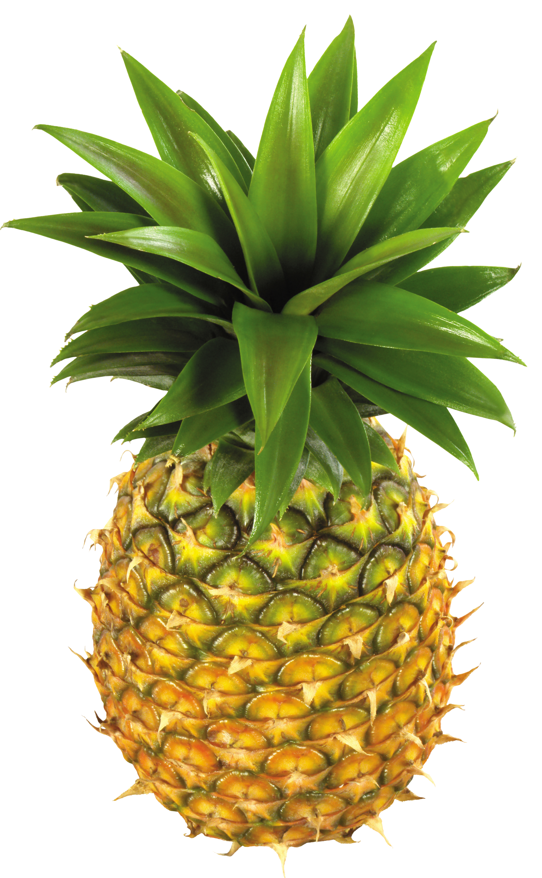 Pineapple clip art free. Win clipart nature