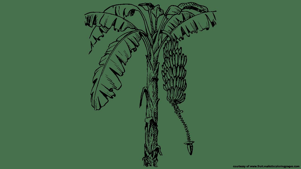 clipart tree banana
