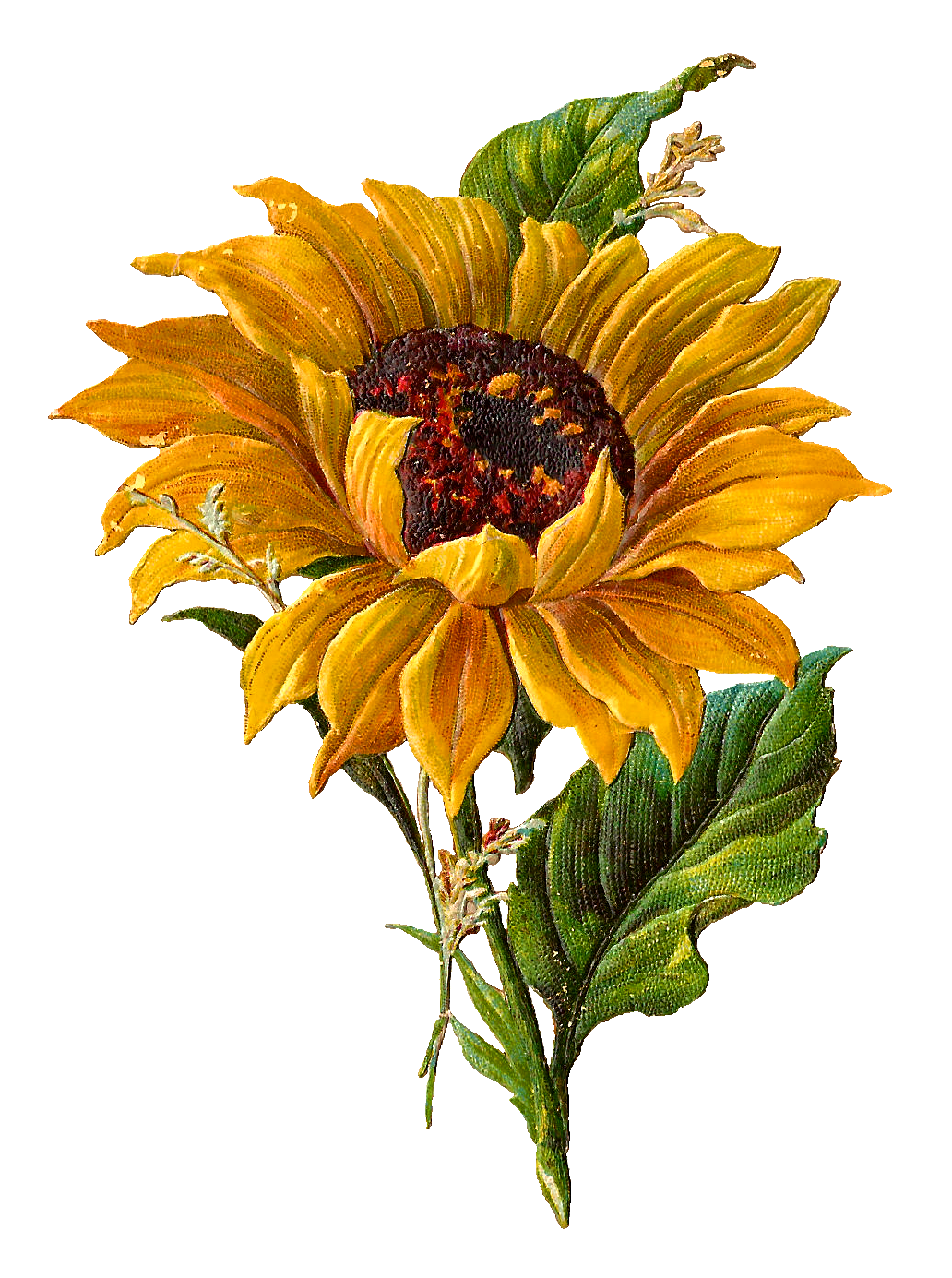 Stunningly pretty digital stock. Field clipart sunflowers