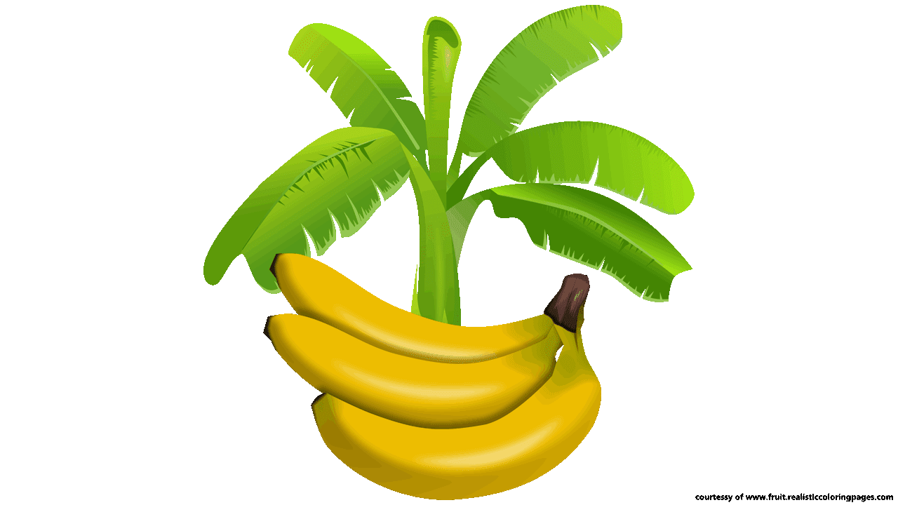 Tree clipart banana.  amazing look download