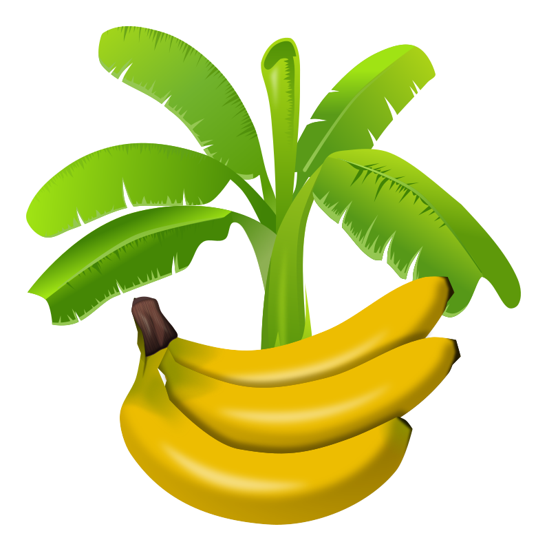 Clipart tree banana. Images of plant png