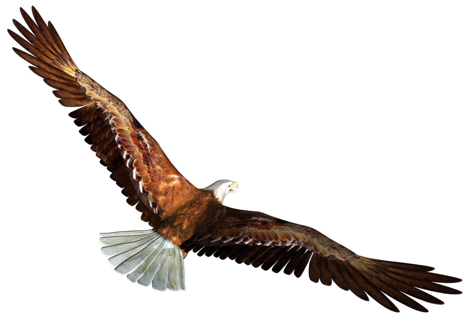 Clipart png eagle. In flight transparent picture