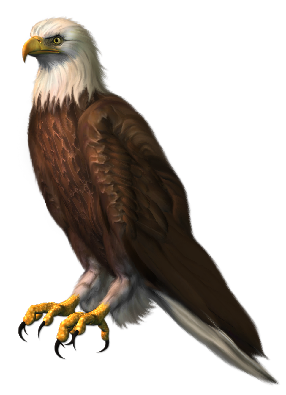 Eagle transparent png picture. Clipart birds red kite