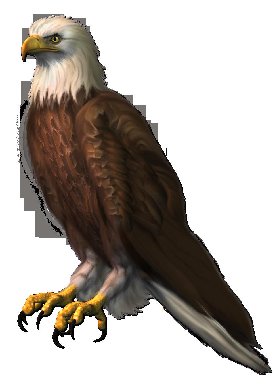 Eagle transparent png picture. Eagles clipart badge