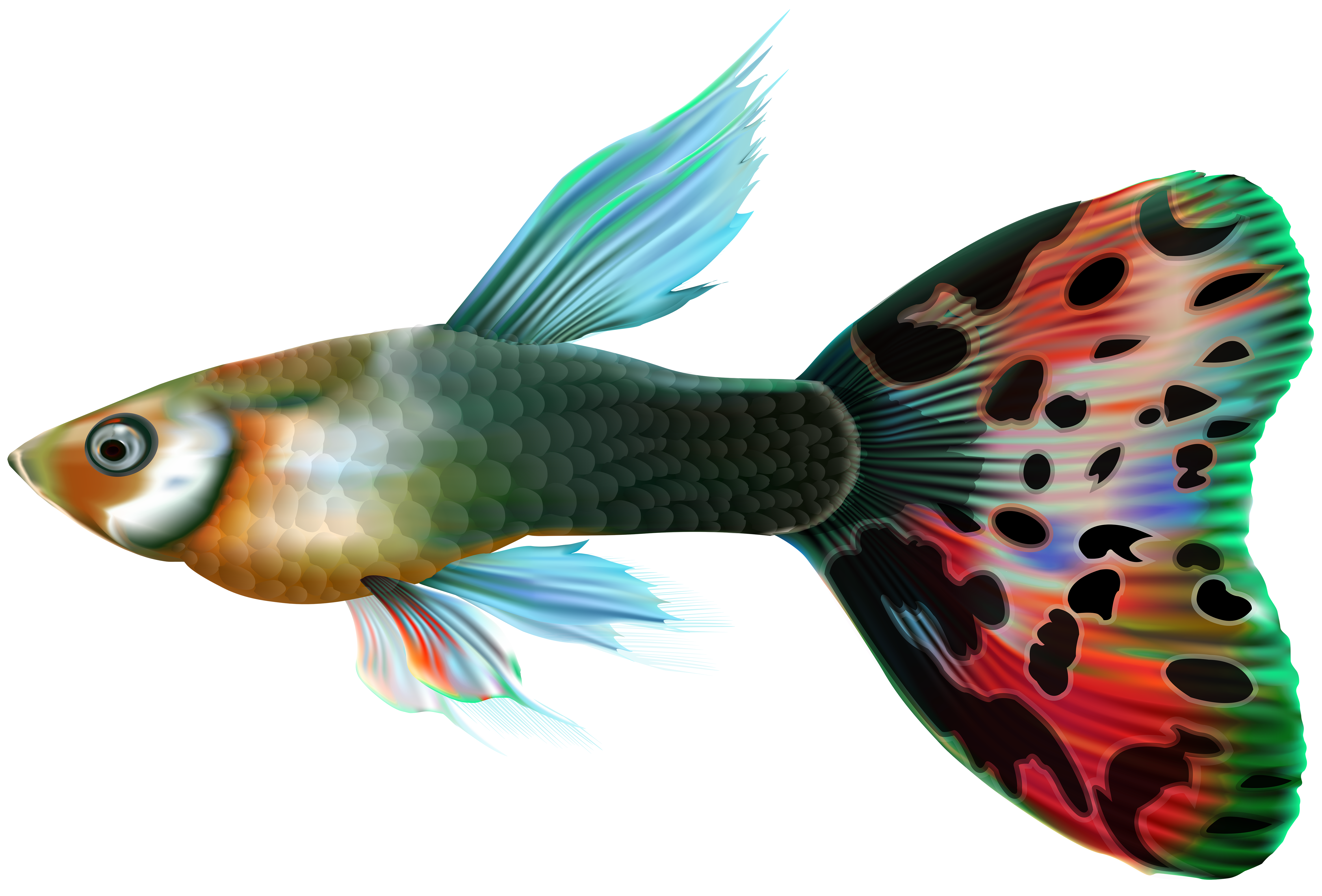 Male guppy png clip. Clipart fish heart