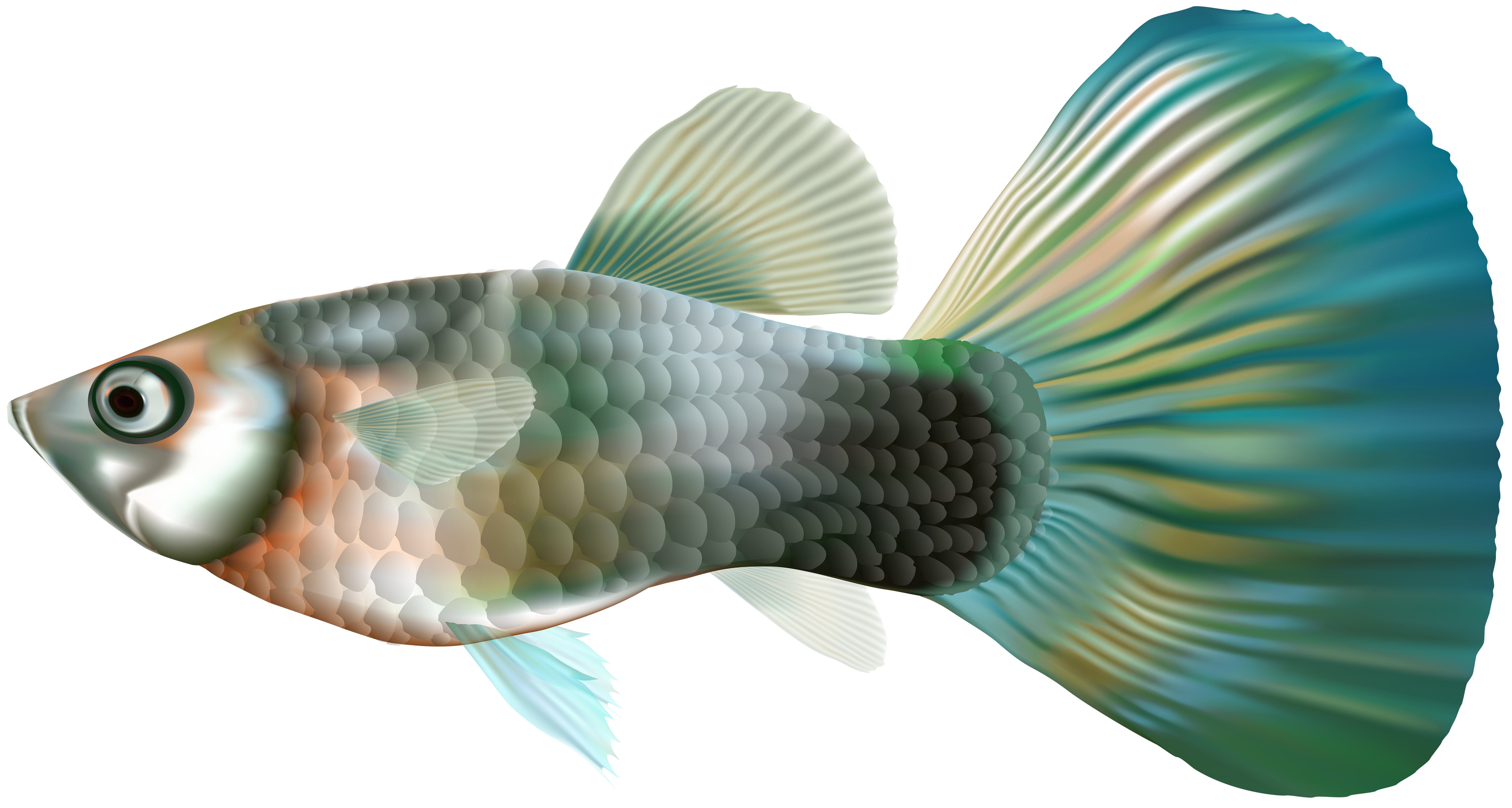 Clipart fish heart. Female guppy png clip