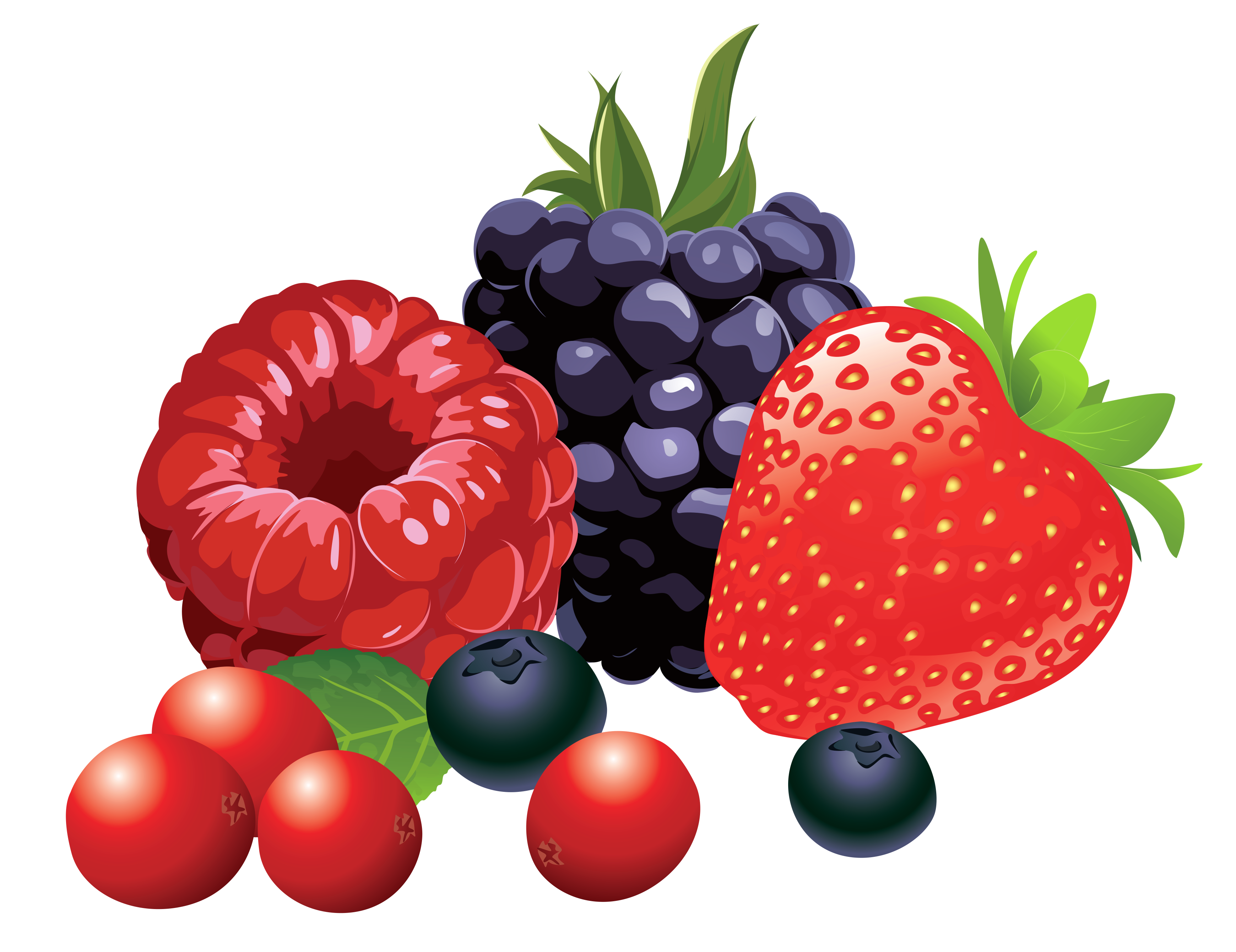 Forest fruits png vector. Clipart fruit stick