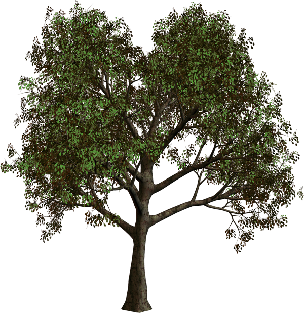 Png gallery yopriceville high. Tree clipart forest