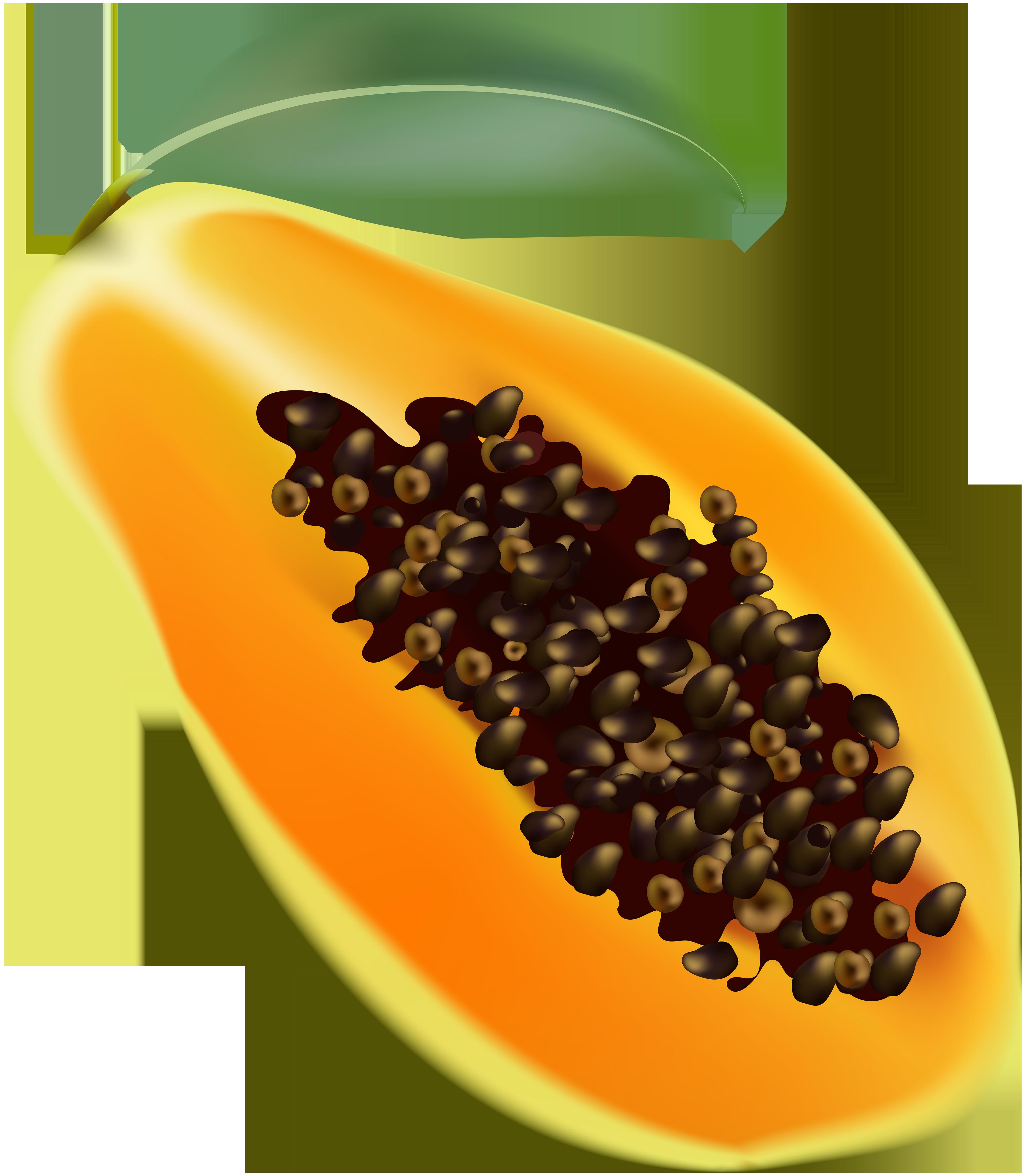 Transparent clip art image. Fruits clipart papaya