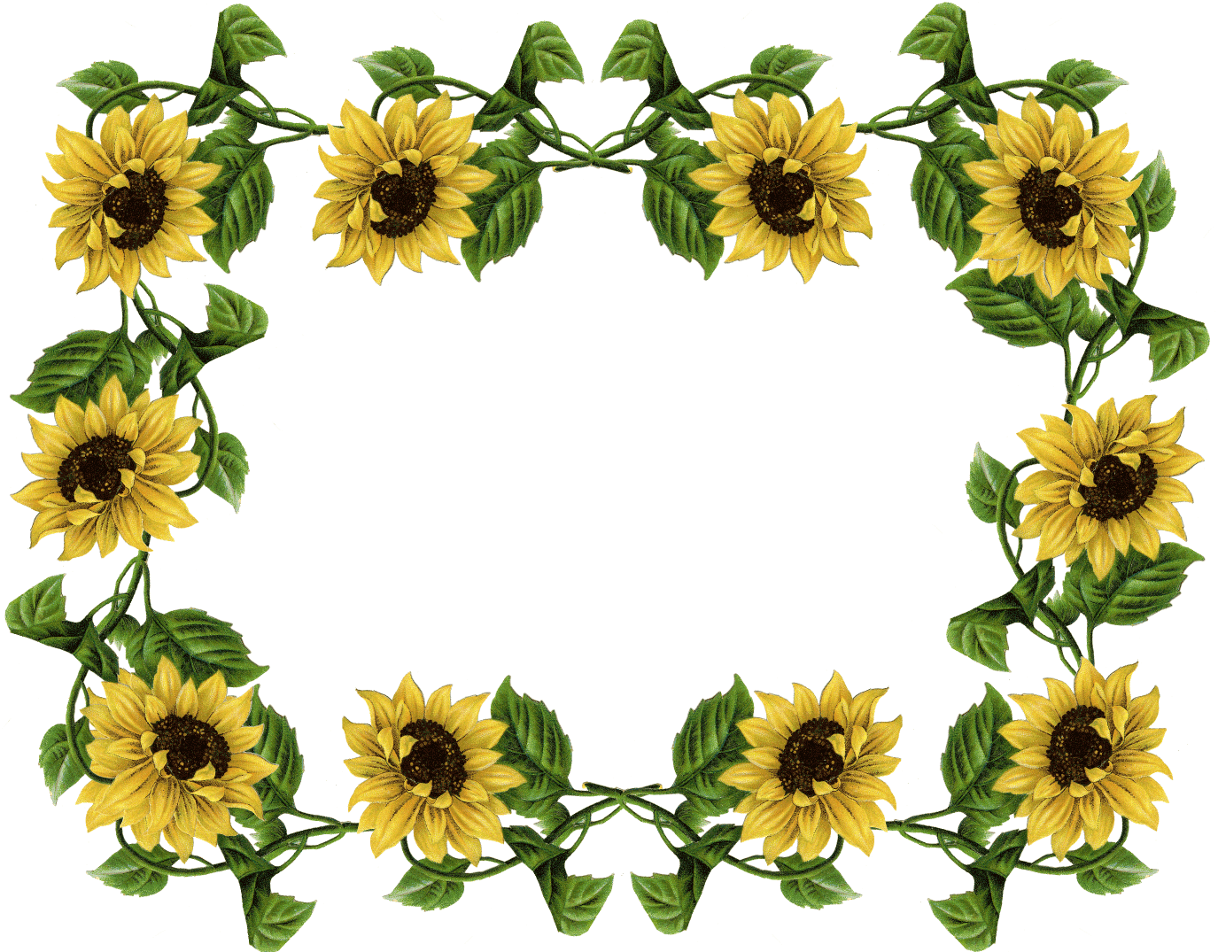 Sunflower pics frame sunflowers. Dig clipart flower