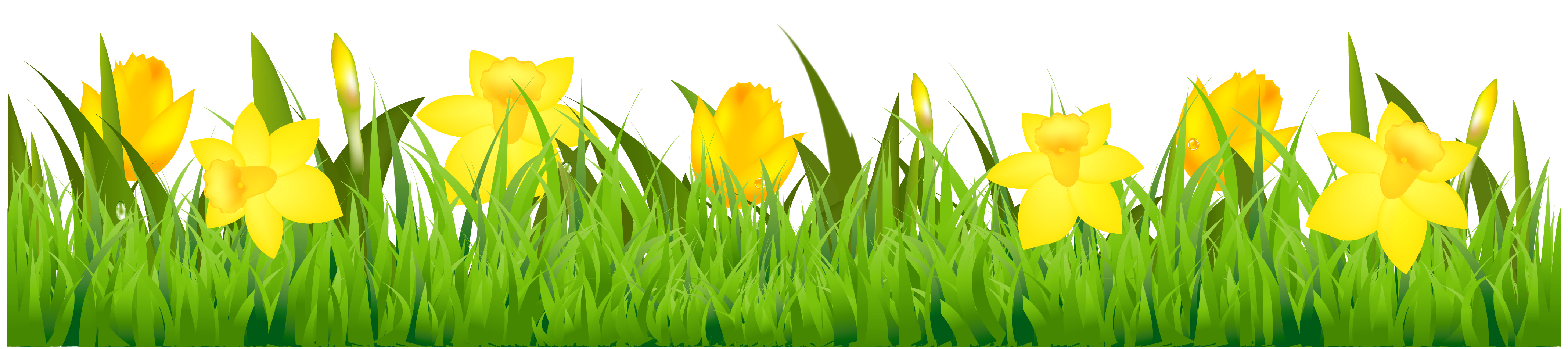Clipart borders daffodil. Grass with daffodils png