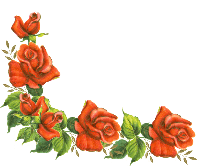 rose clipart boarder #141280537
