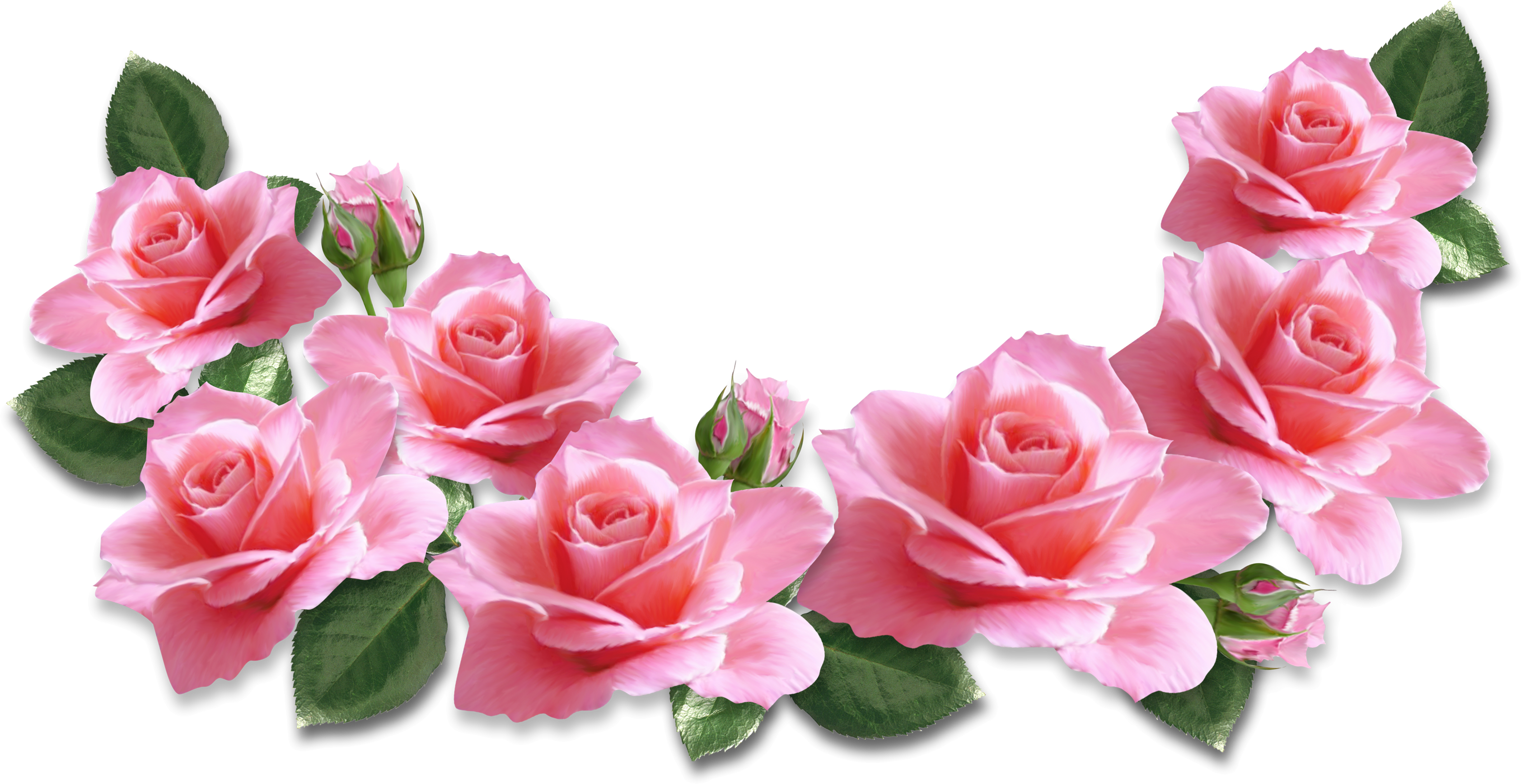 Rose clipart banner.  collection of pink