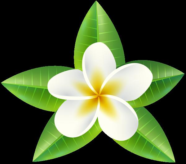 Flower clipart tropical. Png clip art image