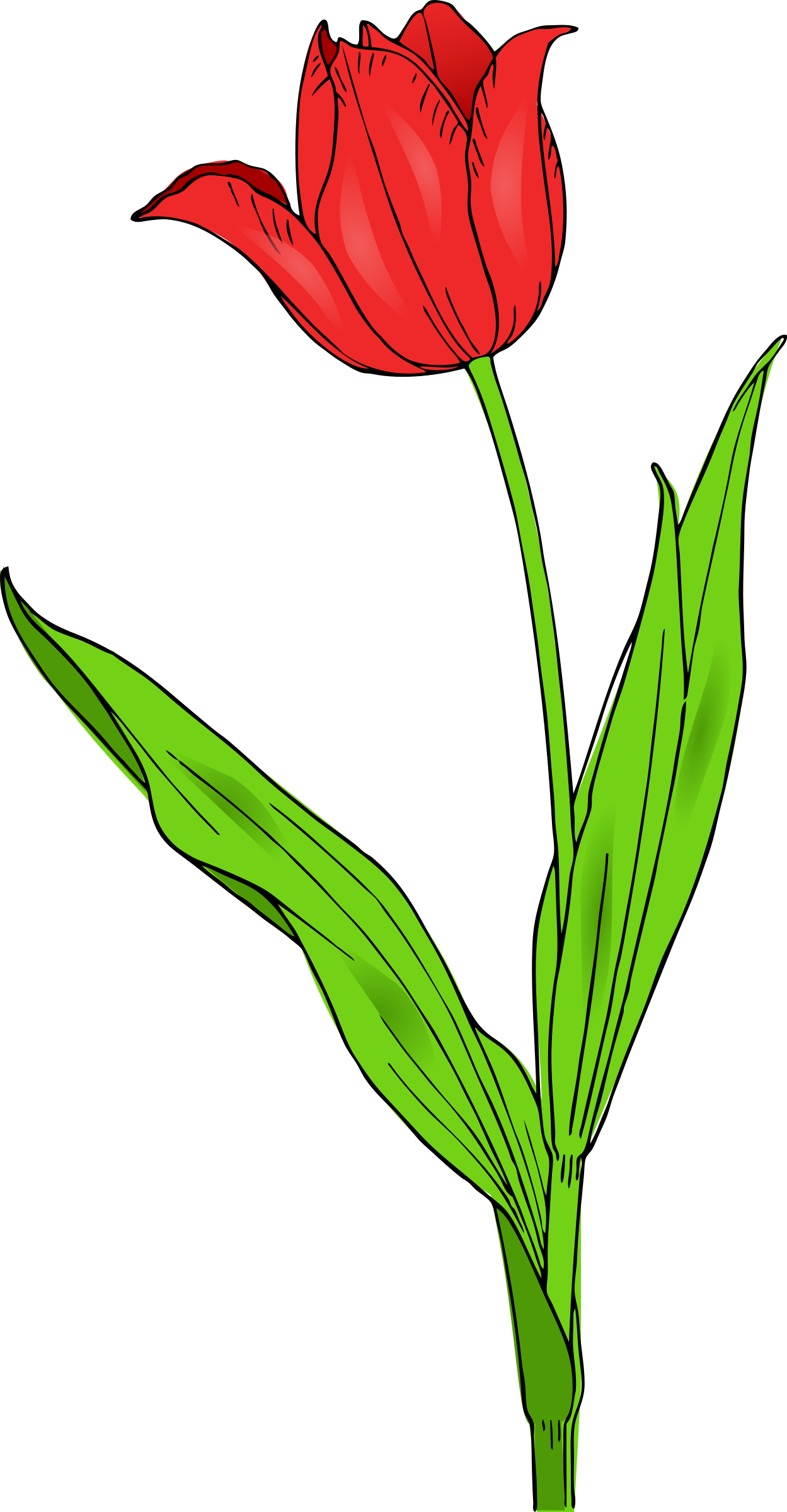 Colored by pitr a. Clipart leaves tulip