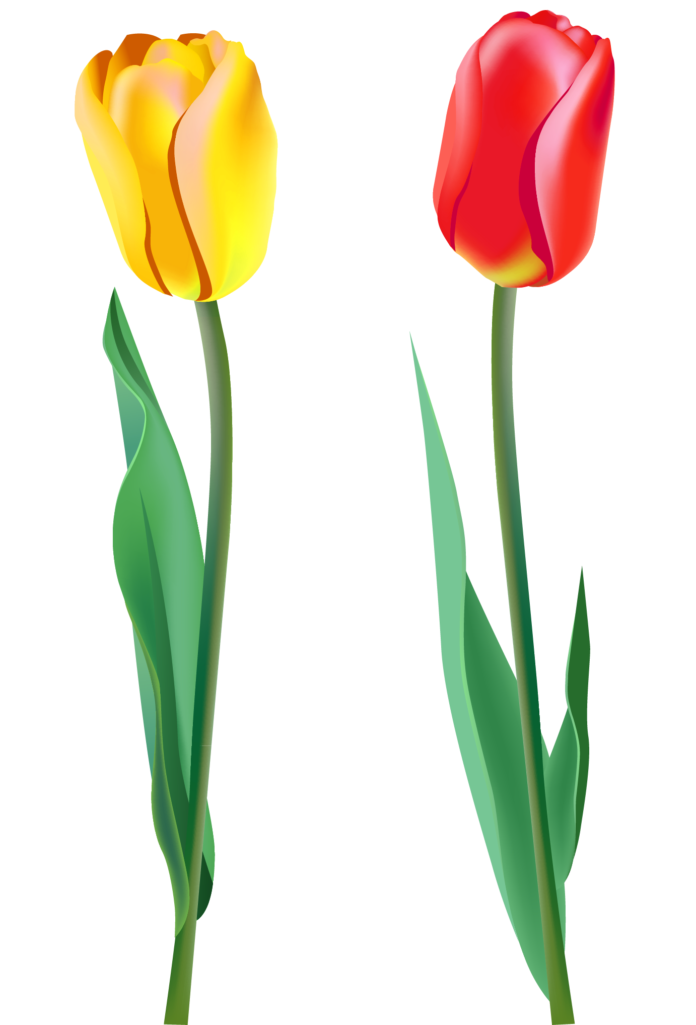 Holidays clipart spring. Tulips png gallery yopriceville