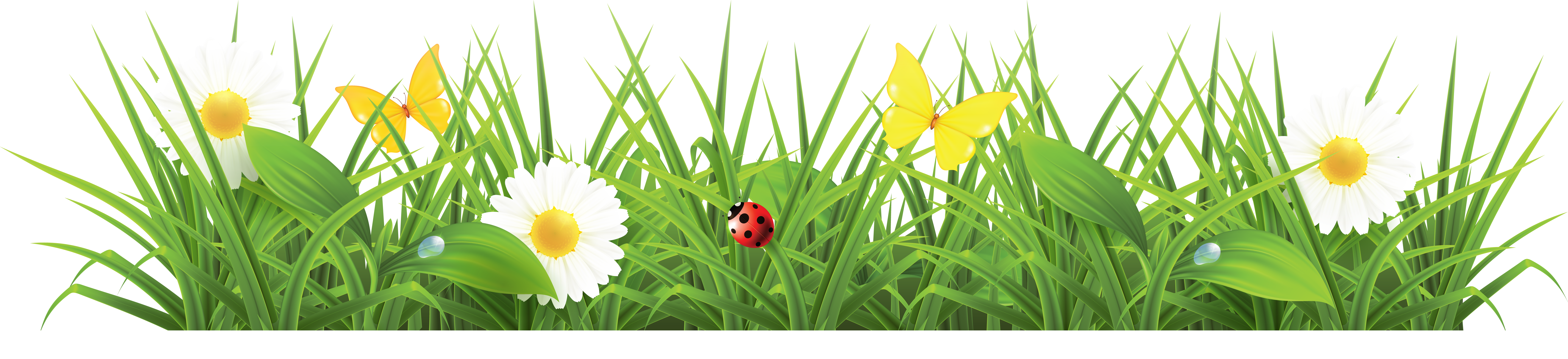 Ladybug clipart side view. Grass png images pictures