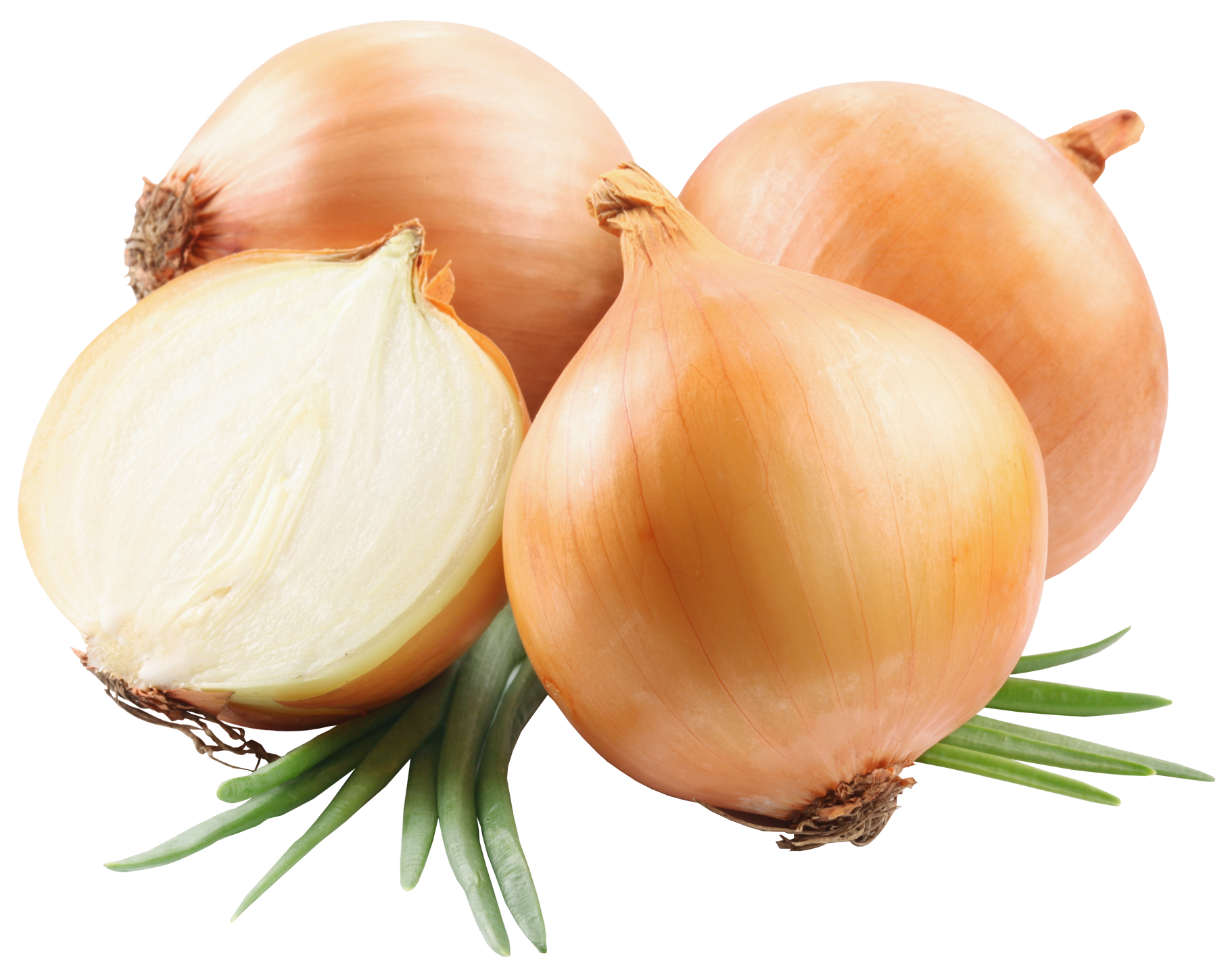 Garlic clipart shallot. Onions png picutre gallery