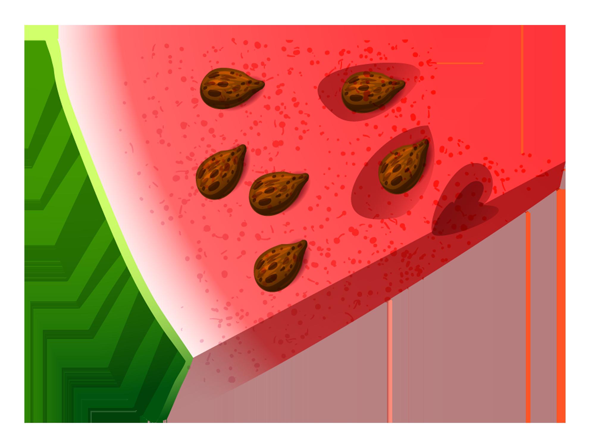 Cookies clipart bitten food. Piece of watermelon png