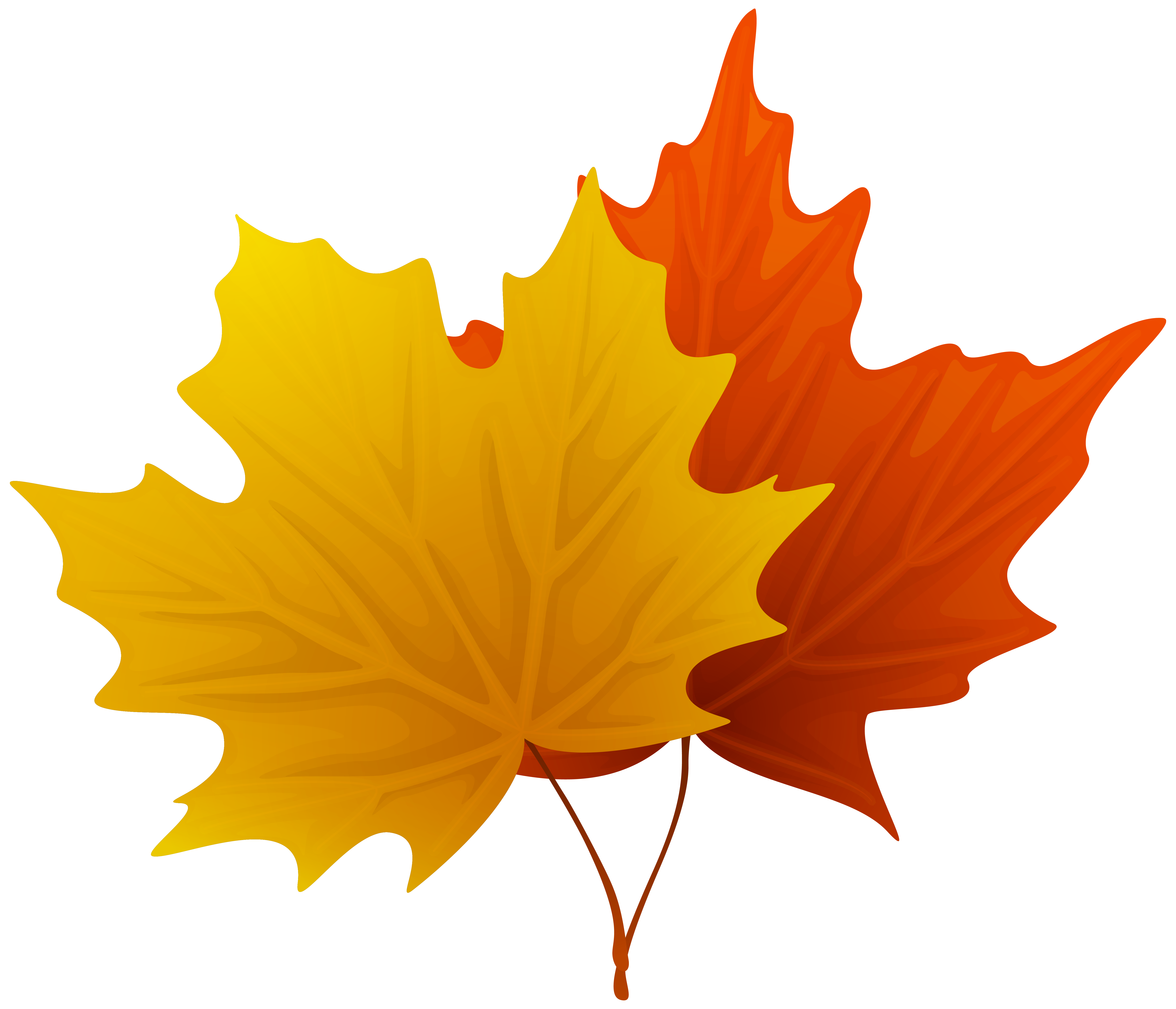 Fall maple leaf clip. Clipart leaves large leave