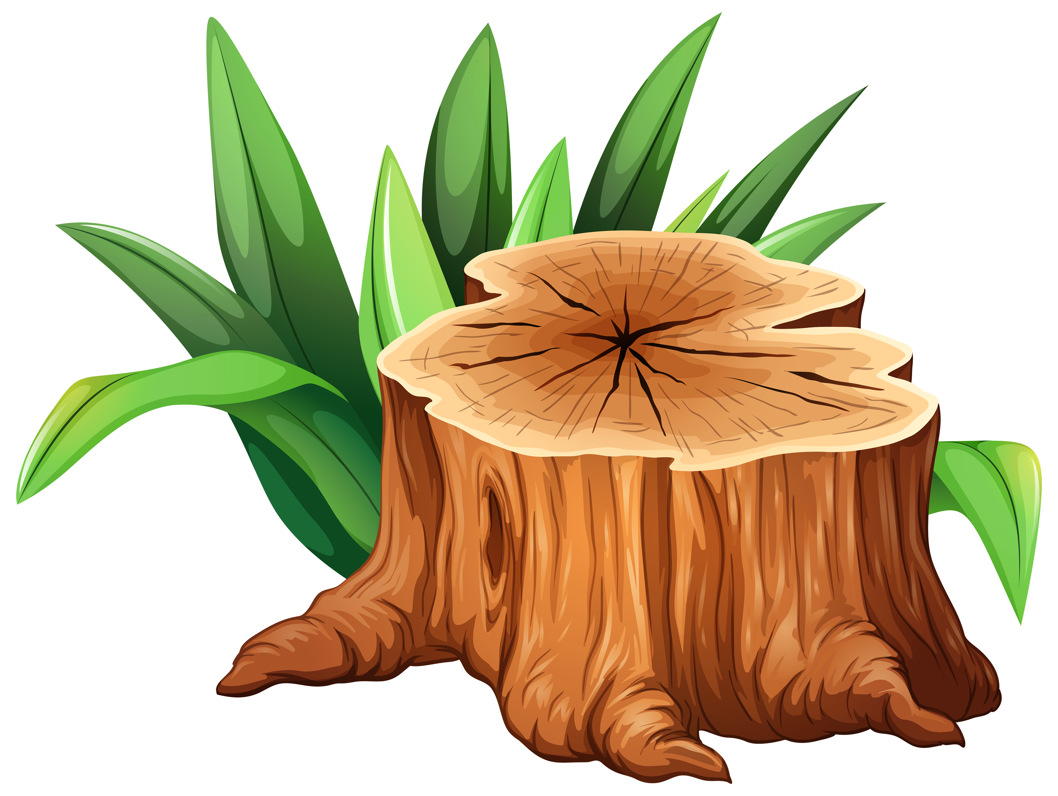 Watermelon clipart tree.  collection of trunk
