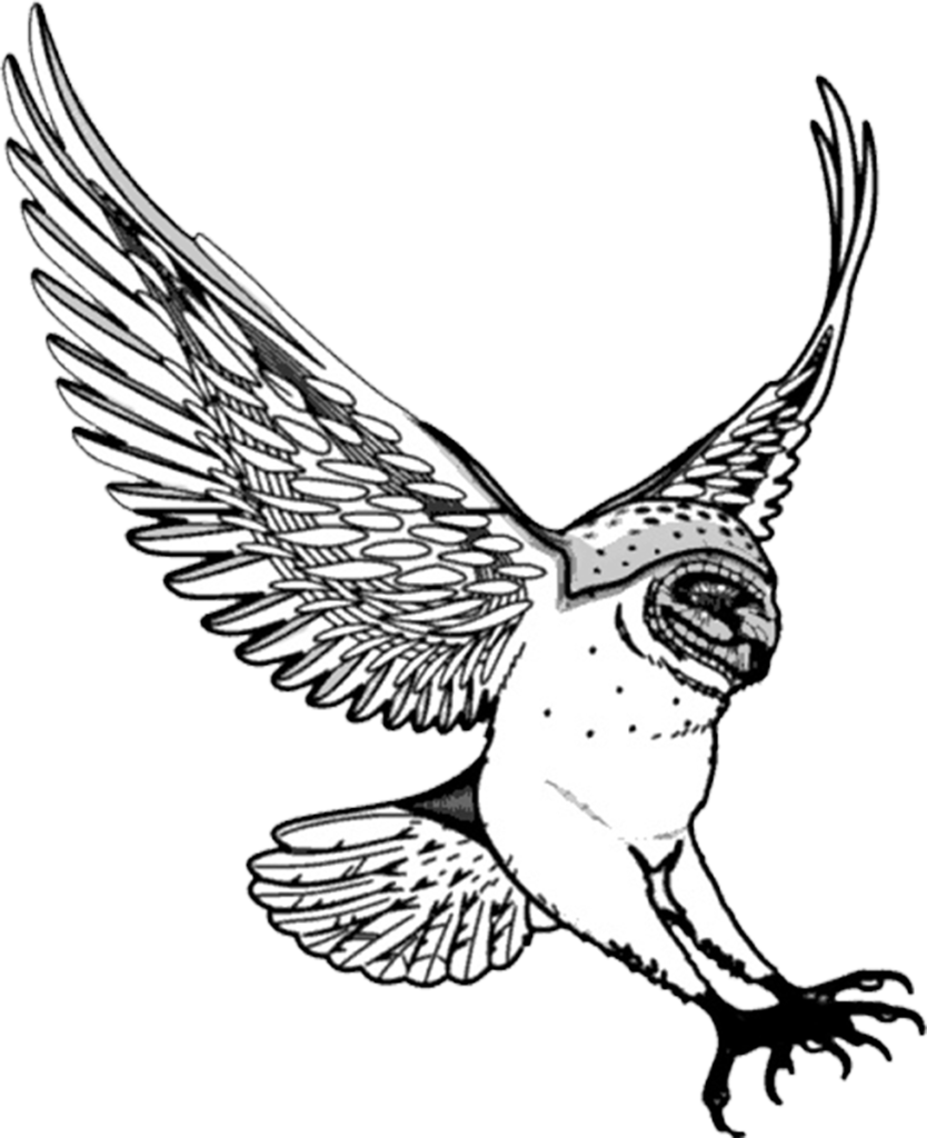 Wing clipart owl. Flying drawing at getdrawings