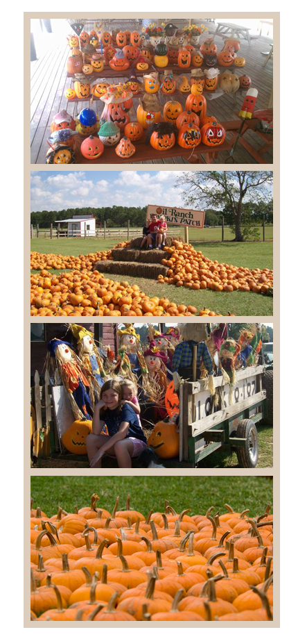 Oil ranch patch houston. Hayride clipart pumpkin pile